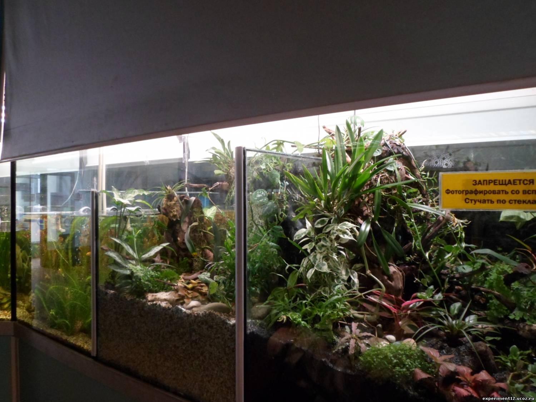 Оранжерея в аквариуме